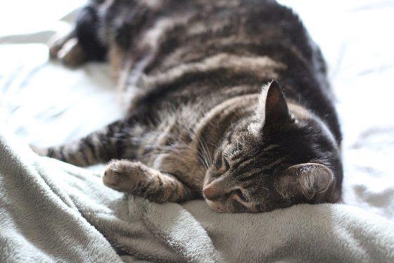 Tabs sleeping kitty dreamer