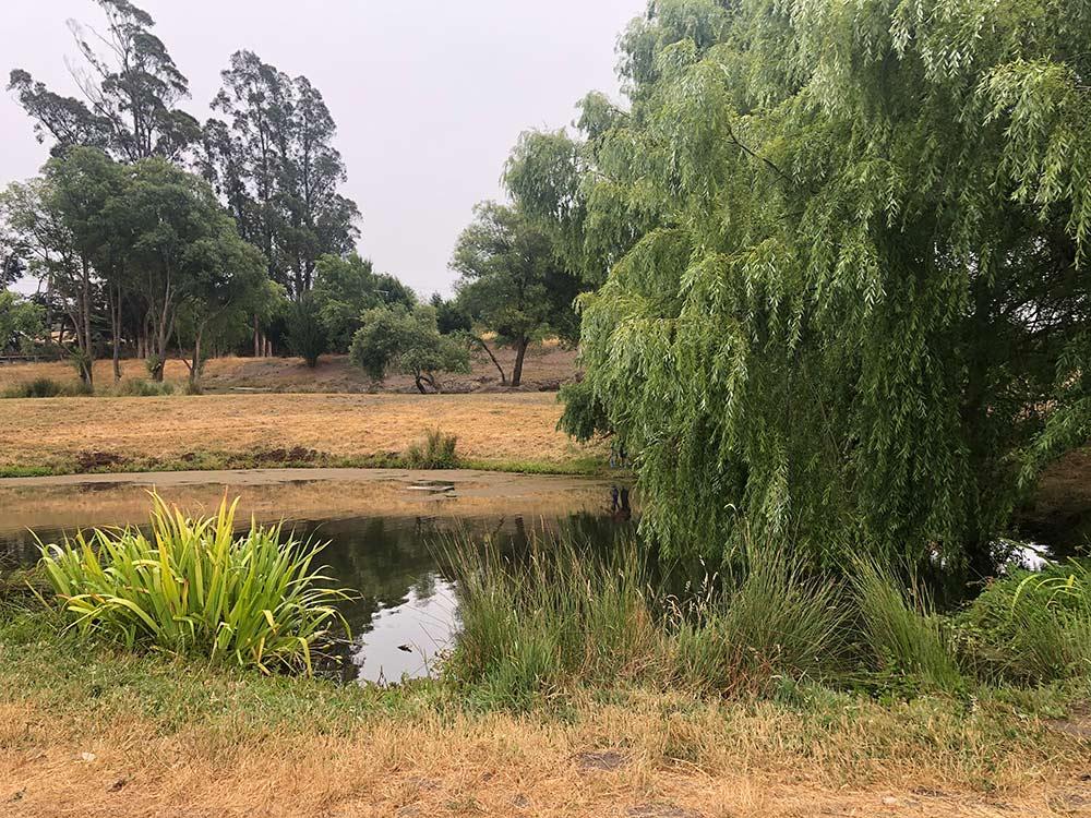 duckworth farms pond