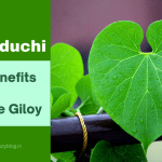 Giloy/Guduchi: Health Benefits and How to Use Giloy