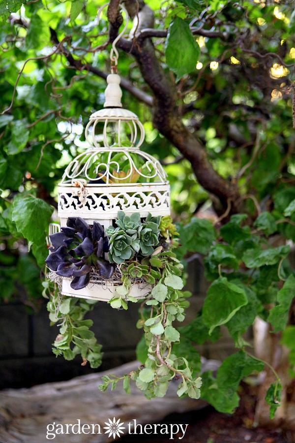 Succulent Bird Cage Planters