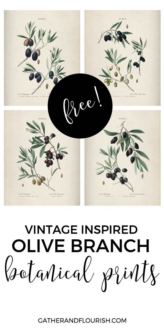 Free Olive Branch Printables