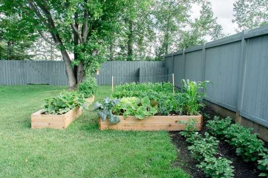 first garden, raised garden bed, cedar garden bed