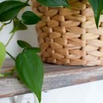 The Perfect Beginner Houseplant for Black Thumbs