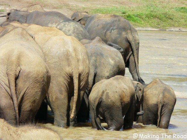 balade a dos d'elephant au sri lanka