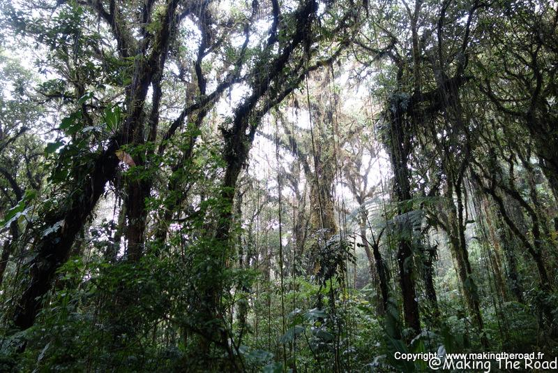 Réserve Santa Elena au Costa Rica