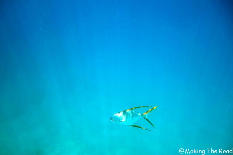 Costa Rica - isla del Cano - snorkeling excursion ocean