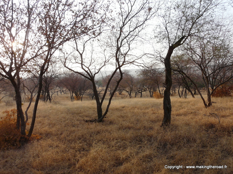 2 semaines itineraire inde du nord  blog voyage visiter parc national ranthambore