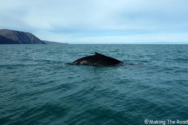 voir des baleines islande husavik voyage en septembre photo blog