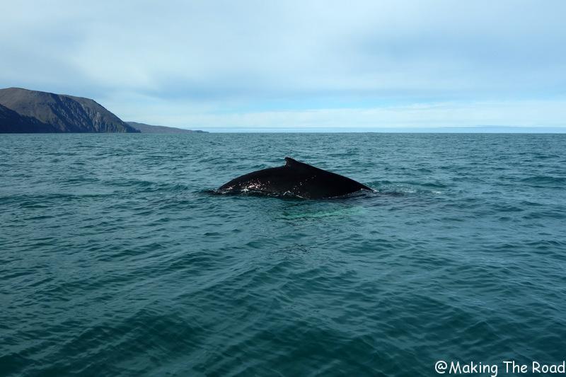 safari voir les baleines islande husavik voyage en septembre photo blog