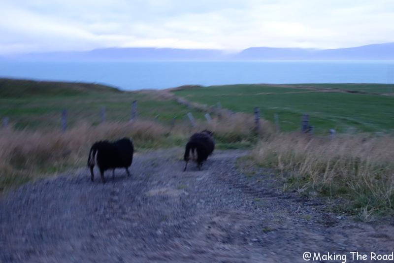 grettislaug sources chaudes islande nord