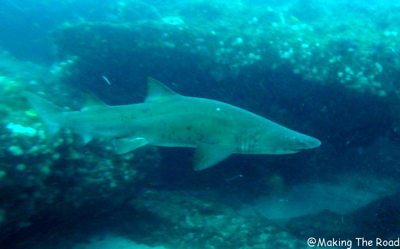 plongée aliwal shoal - requin - afrique du sud