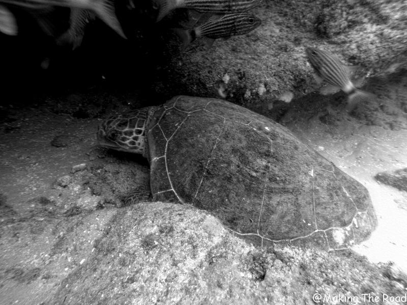 plongée aliwal shoal tortue
