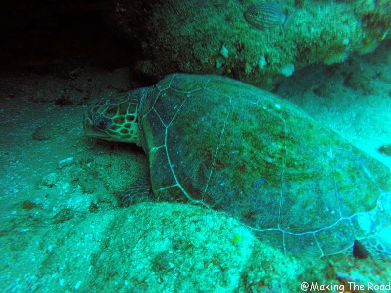plongée aliwal shoal tortue - afrique du sud
