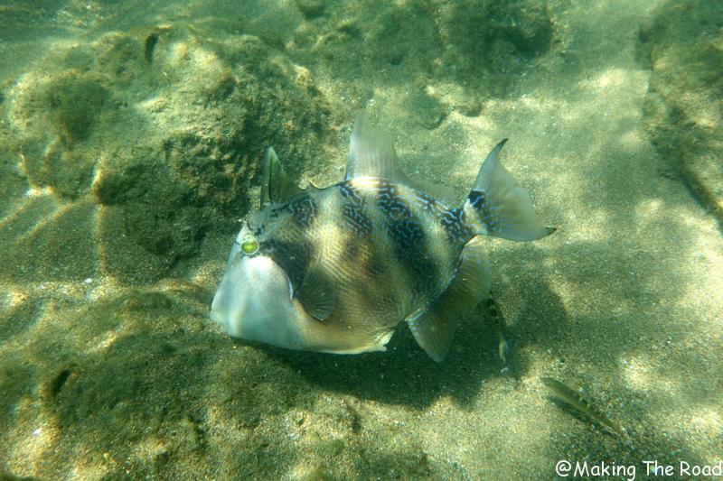 ou faire du snorkelling corcovado costa rica