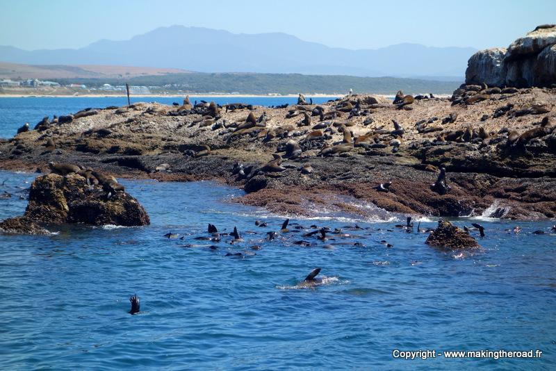 plongéé avec des requin mossel bay afrique du sud