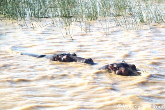 voir hippopotames safari afrique du sud st lucia