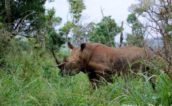 reserve afrique du sud Hluhluwe Umfolozi safari rhinoceros