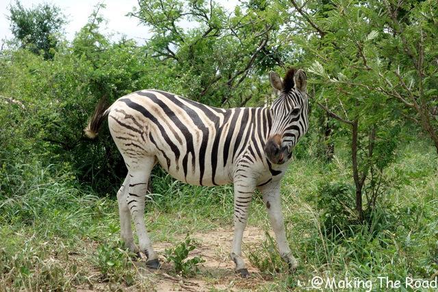 Hluhluwe Umfolozi safari zebre