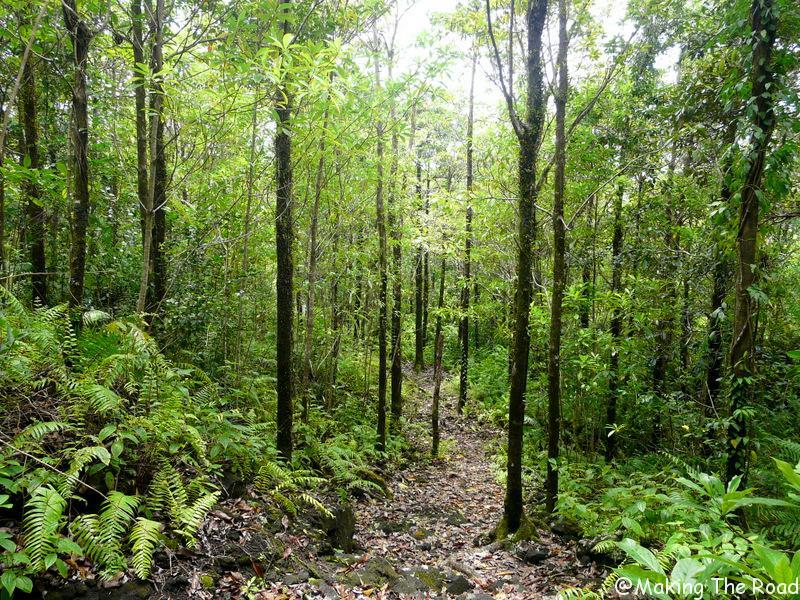 foret de mare longue randonnée reunion facile sentier botanique