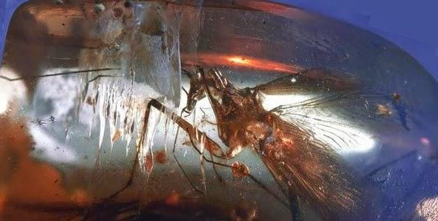 Kecoa Predator di Zaman Purba
