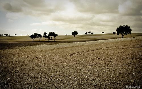 Final de otoño en los campos de Castilla