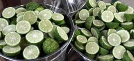kaffir limes manufactory