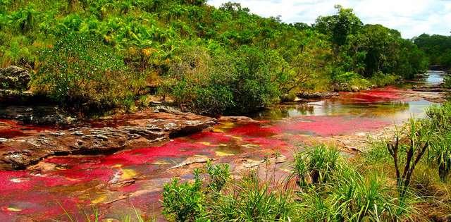 Cano-Cristales-Nehri-Kolombiya Renkli ve İnanılmaz Dünya Manzaraları