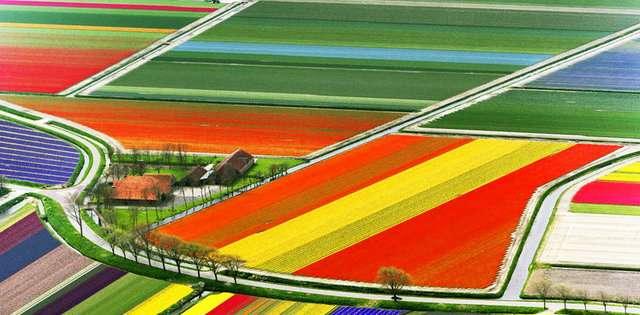 Hollanda-Lale-Nergis-Sumbul-Tarlalari Renkli ve İnanılmaz Dünya Manzaraları