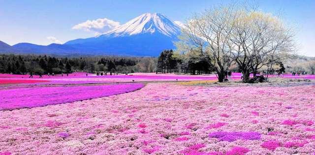 Sibazakura-tepesi-japonya Renkli ve İnanılmaz Dünya Manzaraları
