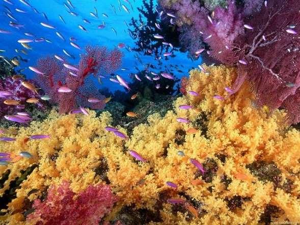 buyuk-merca-kayaliklari-avusturalya-2 Renkli ve İnanılmaz Dünya Manzaraları