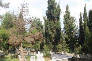 1 Mezarlara neden çiçek dikilir?