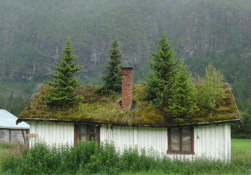 grass-roofs-scandinavia-Norveç Çatısında Doğa Barındıran Evlerin Diyarı!