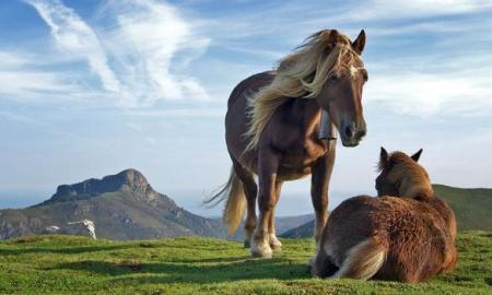 atlar-neden-ayakta-uyur