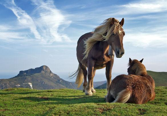 atlar-neden-ayakta-uyur Atlar Neden Ayakta Uyur?