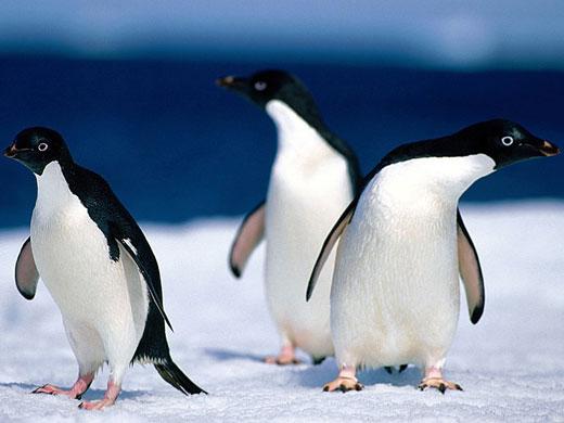 penguen İnsanların, Doğayı Olduğu Gibi Bırakması ve Koruması İçin 10 Sebep!