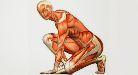 adim-ve-kaslar İnsan Vücudundaki Hadi Ya! Dedirtecek Mucizevi 20 Bilgi