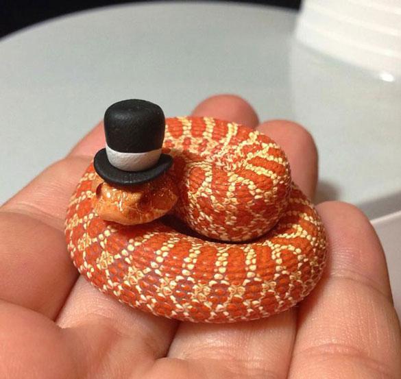 Yılan Korkunuzu Yenmenizi Sağlayacak Sevimli Şapkalı Yılanlar