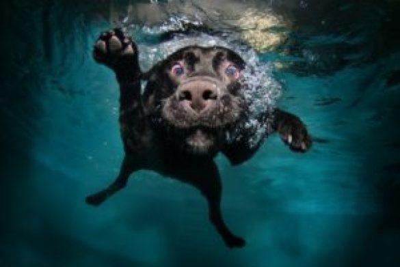 Yaz Aylarında Evcil Hayvan Bakımı İçin İpuçları