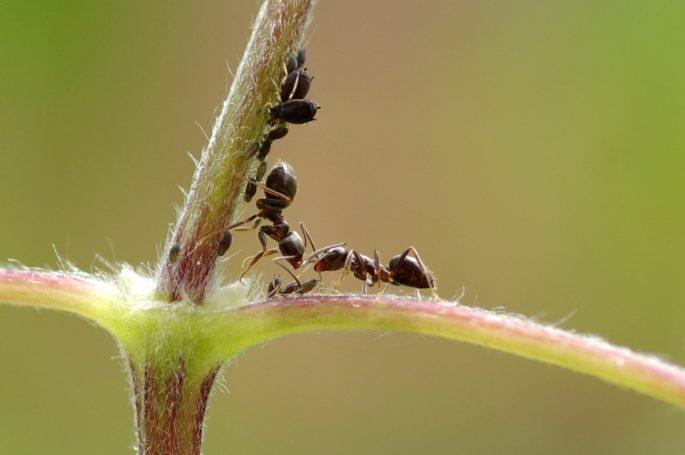 Çalışkan Karıncalar...