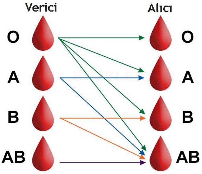 Kanın Dolaşım Serüveni