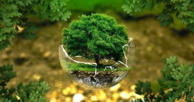 bonsai, natura málaga