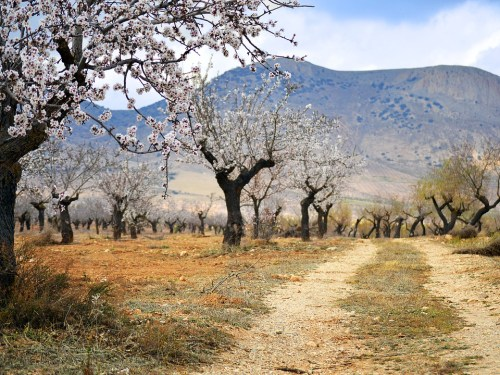 Almond route in Malaga