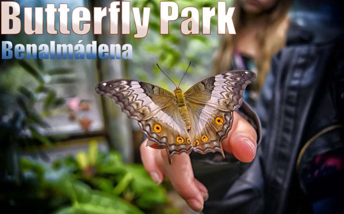 Butterfly Park in Benalmadena, prices and opening times