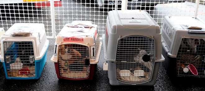 Transportines para mascotas