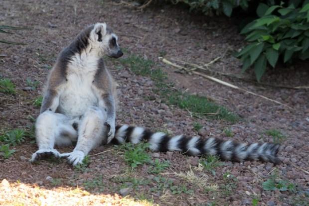 lemure2