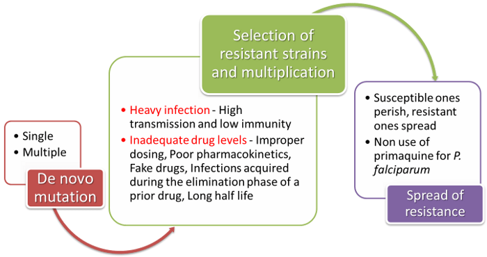 Drug Resistance – Malaria Site