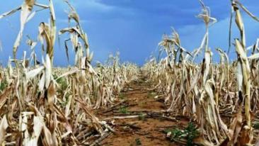 Drought hit hard in Malawi