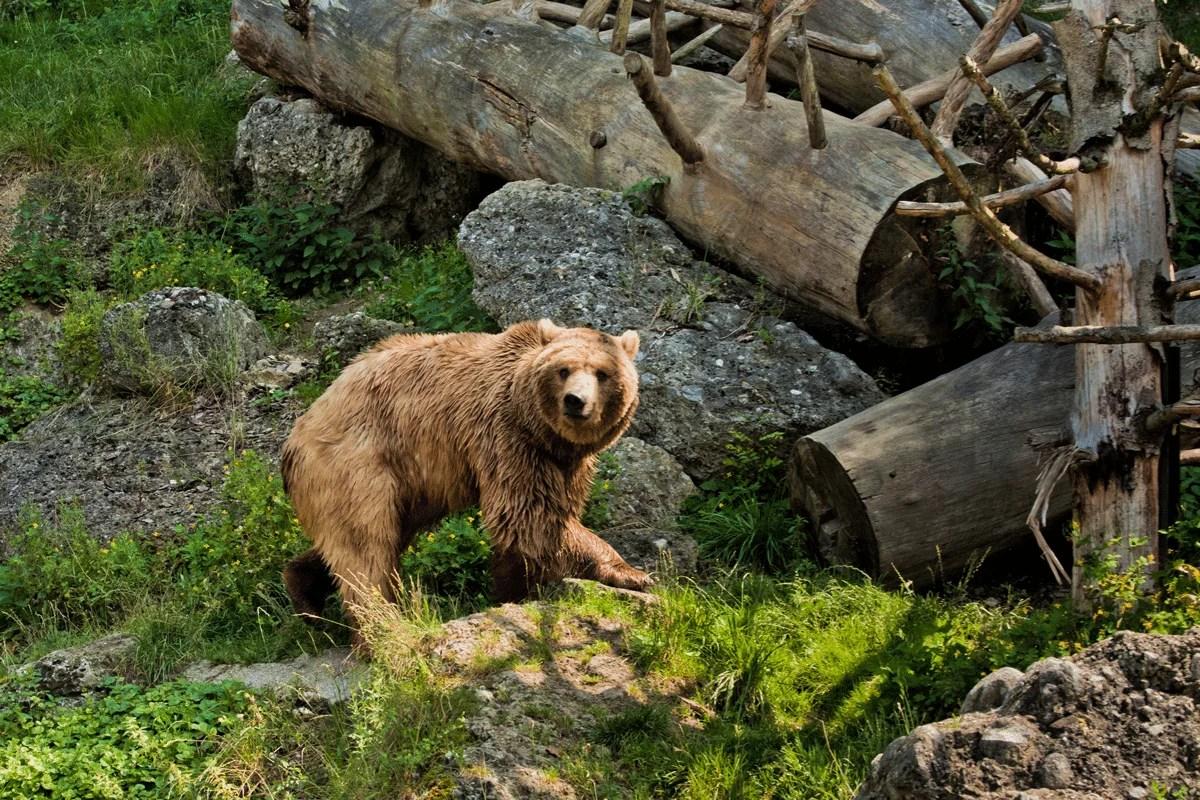 نتيجة بحث الصور عن حديقة الطيور والنباتات : Faruk Yalçın Zoo and Botanic Park) Darica Zoo)