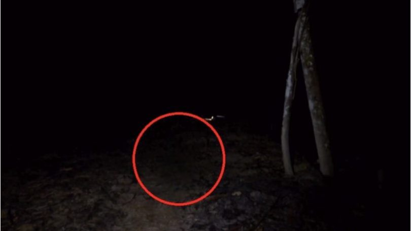 swamp forest paranormal activity