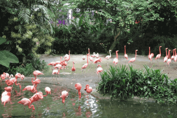 KL Bird Park Lake Garden
